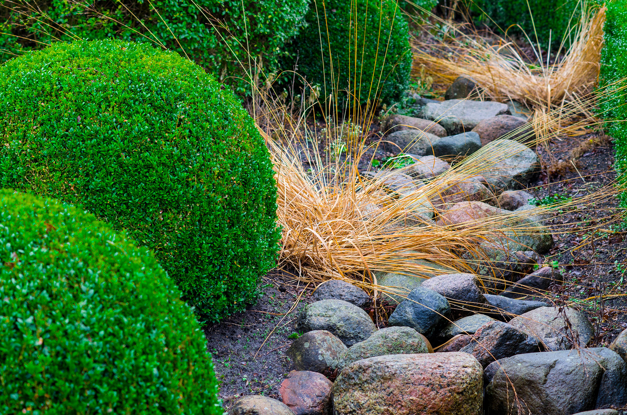 grass and shrubs growing around stones