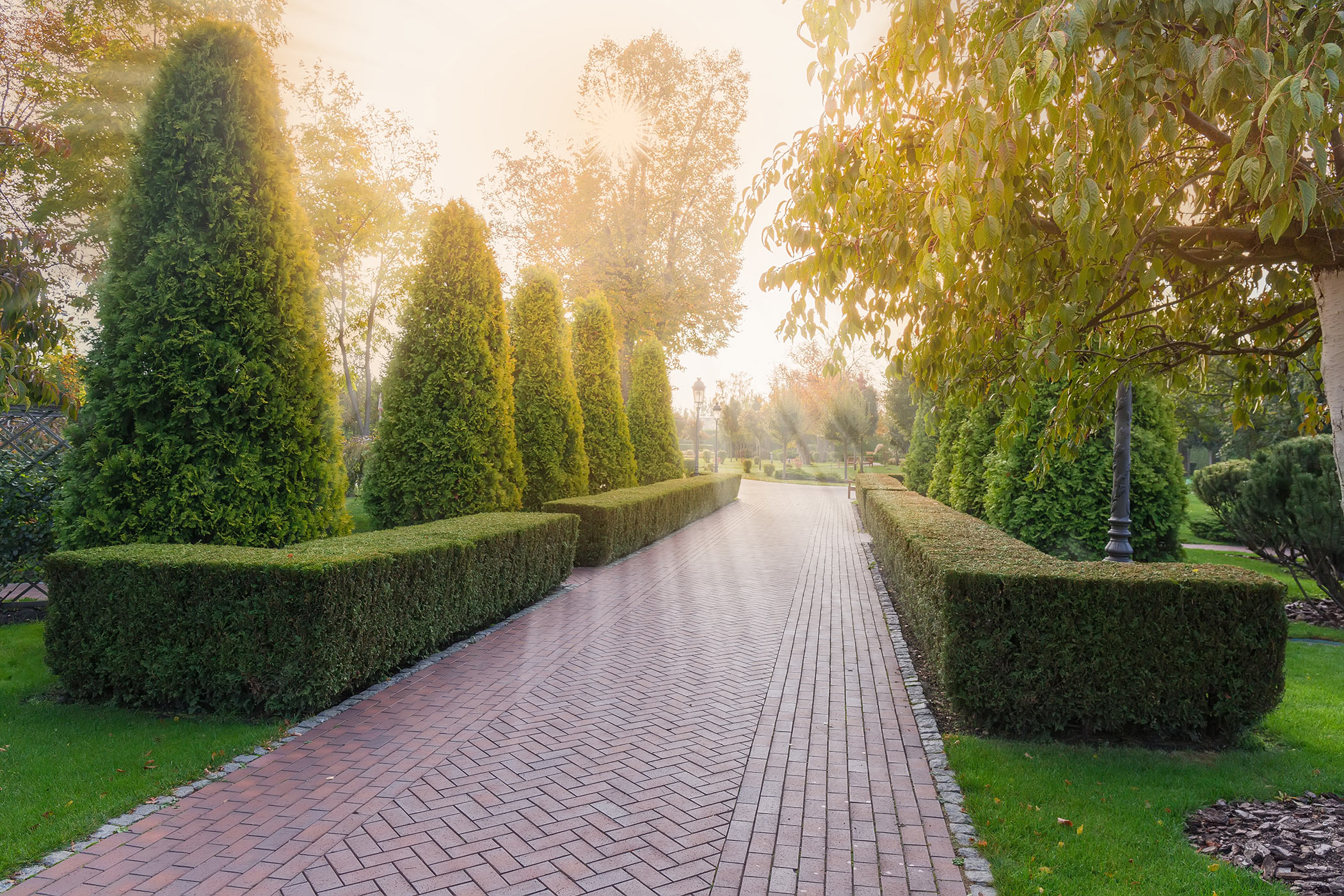 shrubs lining a paver walkway