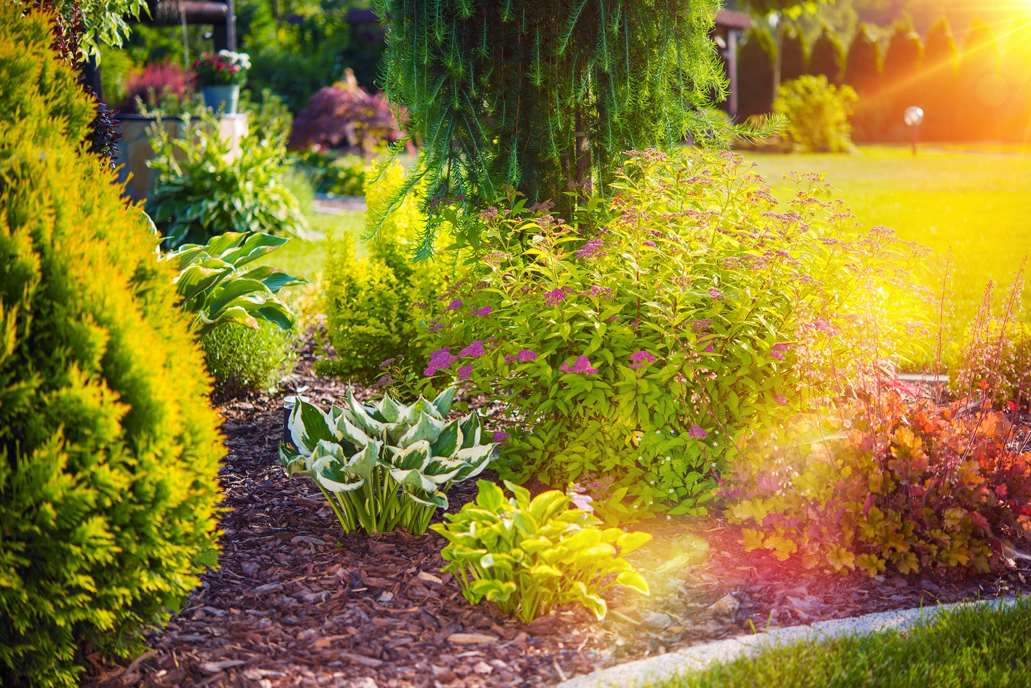 flowers and shrubs in landscaping