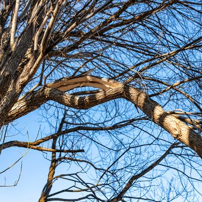 tree branch cracking