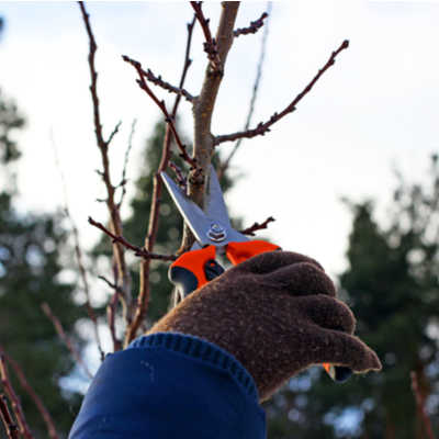 pruning dead branches